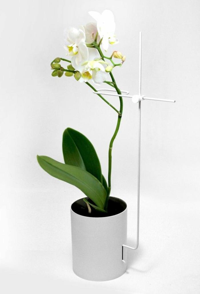 1-decouvrir-la-beaute-des-orchidées-comme-plantes-d-interieurs-magnifiques-banches-fleurs