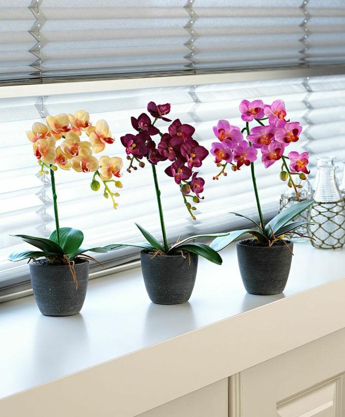 1-decouvrir-la-beaute-des-orchidées-comme-plantes-d-interieurs-magnifiques-pour-le-salon