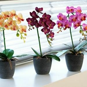 Les fleurs d'intérieur! Pourquoi choisir les orchidées?