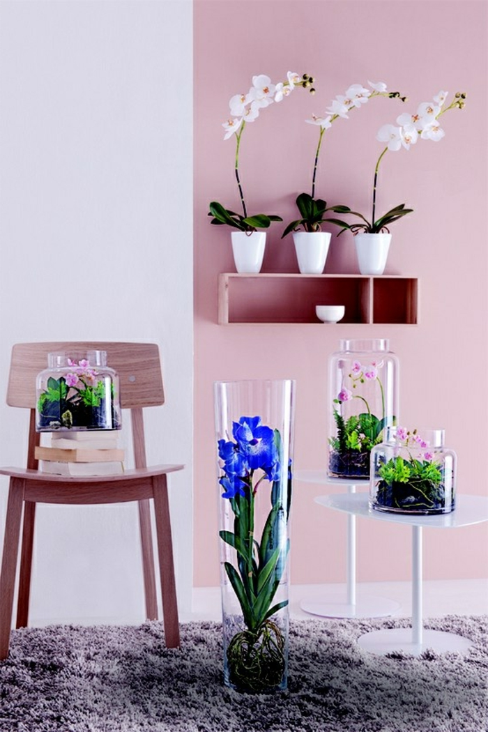 1-decouvrir-la-beaute-des-orchidées-comme-plantes-d-interieurs-magnifiques