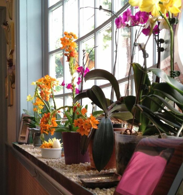 1-faire-refleurir-une-orchidée-d-interieur-moderne-comment-faire-refleurir-un-fleur