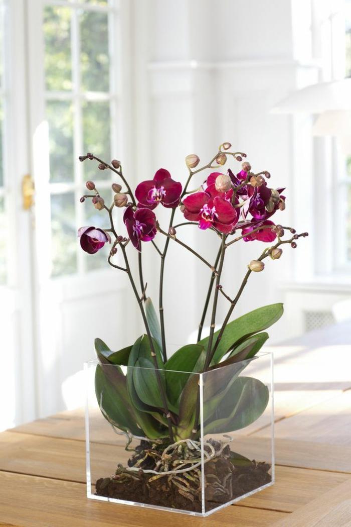 1-faire-refleurir-une-orchidée-violet-d-intérieur-une-jolie-fleur-dans-le-salon