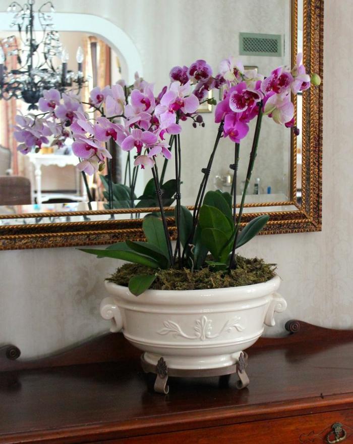1-jolie-decoration-avec-orchidées-violets-les-orchidées-et-l-intérieur-moderne