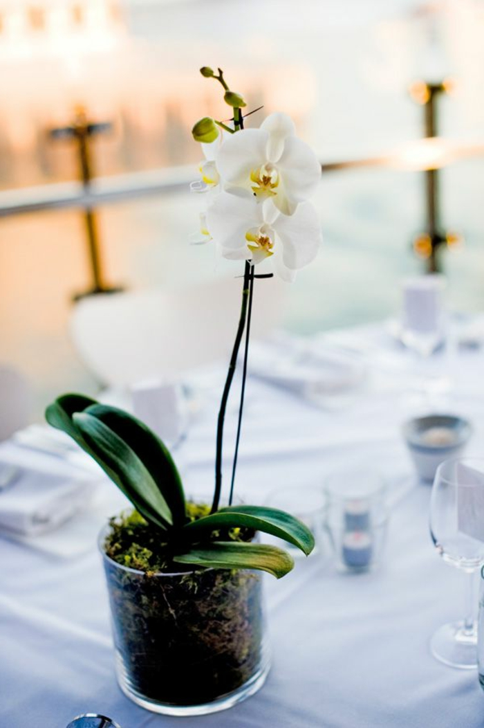 Comment decorer orchidee - Comment arroser les orchidees ...