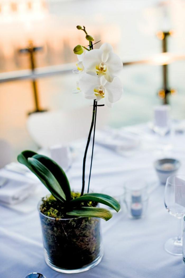 1-les-orchidées-blanches-comment-faire-refleurir-une-orchidée-interieur-pour-creer-une-decoration