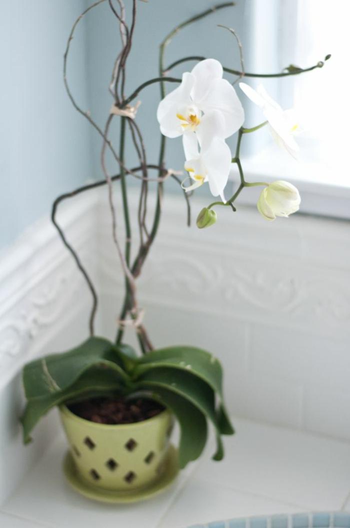 Les Fleurs D Int Rieur Les Orchid Es En 40 Images