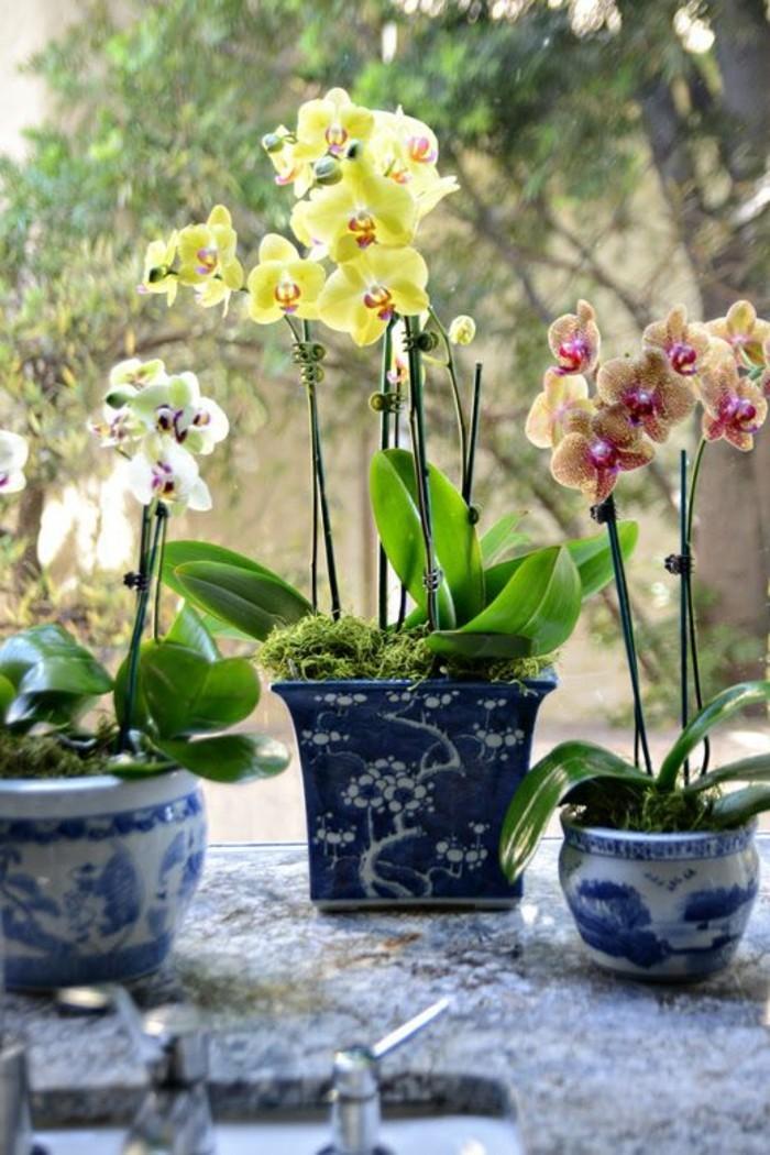 1-les-orchidées-comment-faire-refleurir-une-orchidée-pour-decouvrir-sa-beauté