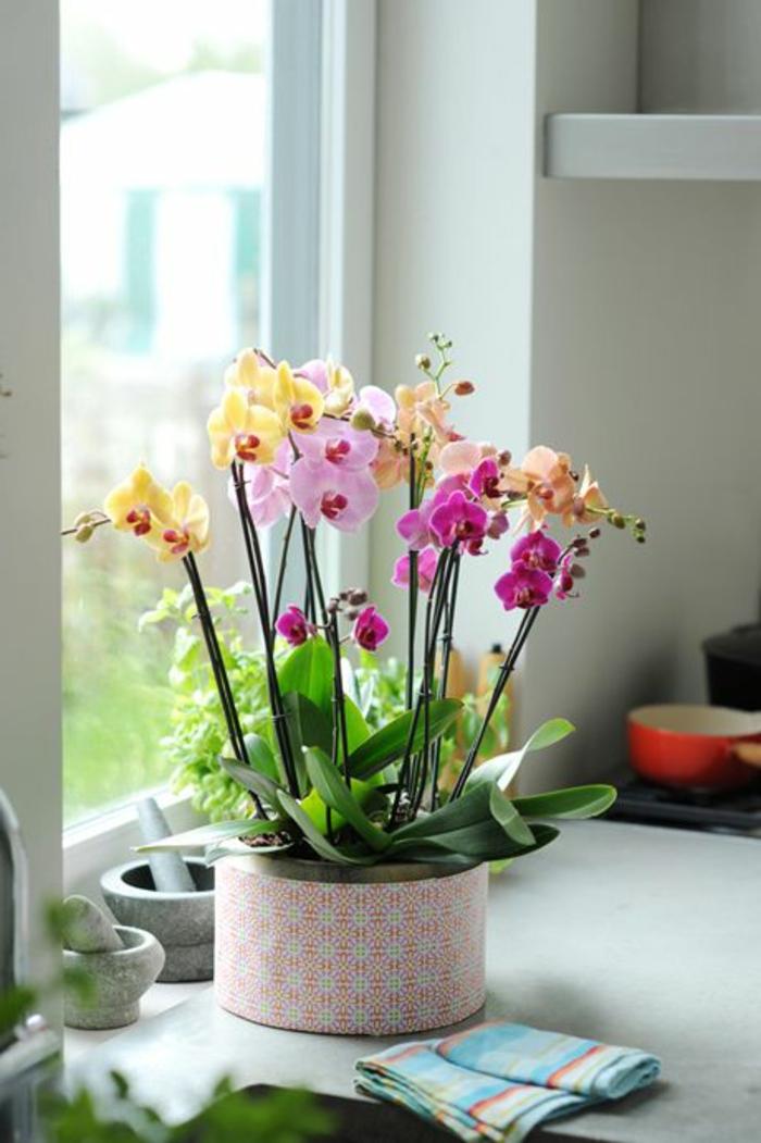 1-les-orchidées-comment-faire-refleurir-une-orchidée-pour-l-interieur-de-la-maison