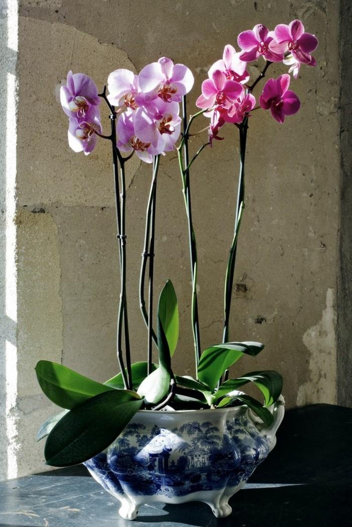 1-une-jolie-variante-pour-bien-choisir-les-orchidées-comment-entretenir-les-orchidées