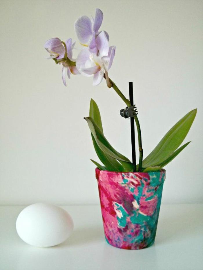 comment-bien-choisir-les-orchidees-pour-bien-decorer-le-salon-fleurs-d-intérieur