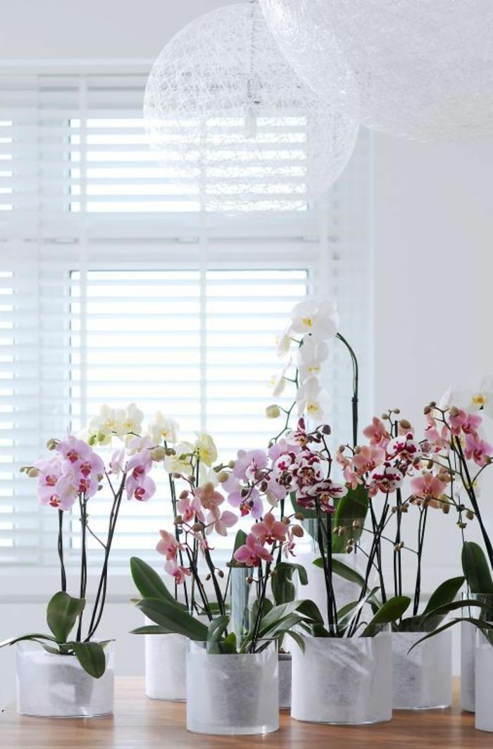 comment-bien-choisir-les-orchidees-pour-bien-decorer-le-salon-quels-fleurs