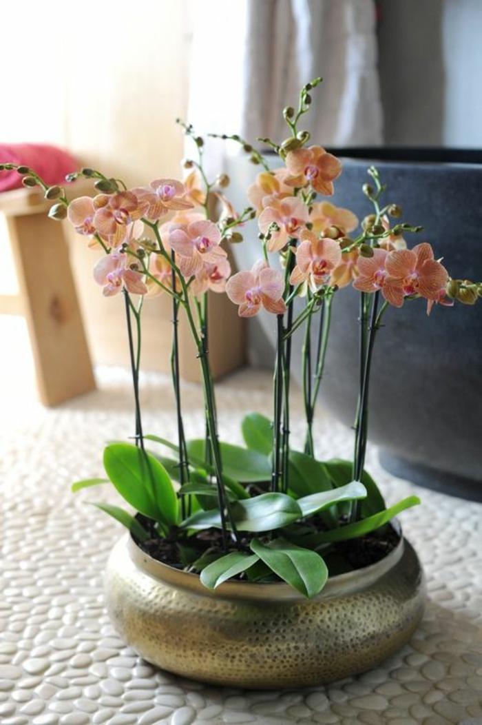Les fleurs d int rieur les orchid es en 40 images - Comment arroser une orchidee ...