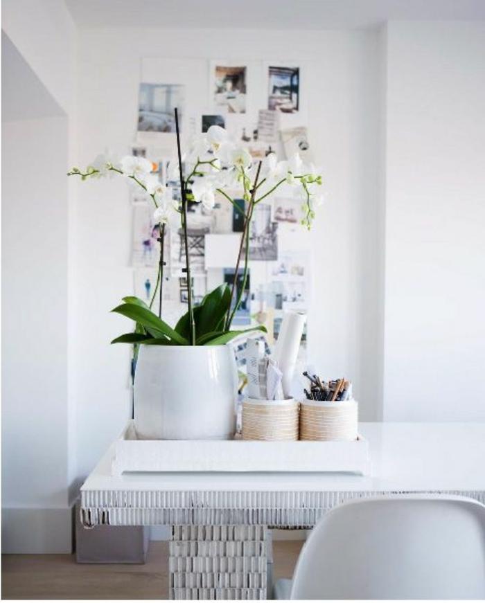 comment-entretenir-les-orchidées-d-interieur-blanches-et-comment-les-faire-refleurir