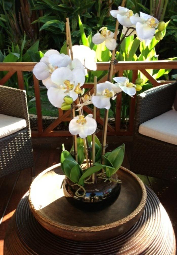 comment-faire-refleurir-une-orchidée-blanche-pour-decorer-la-maison-moderne