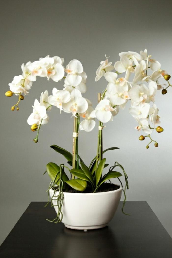 comment-faire-refleurir-une-orchidée-blanche-pour-decorer-la-maison