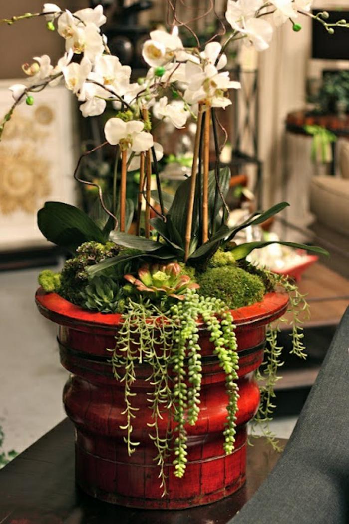 Les fleurs d int rieur les orchid es en 40 images - Peut on couper les racines des orchidees ...