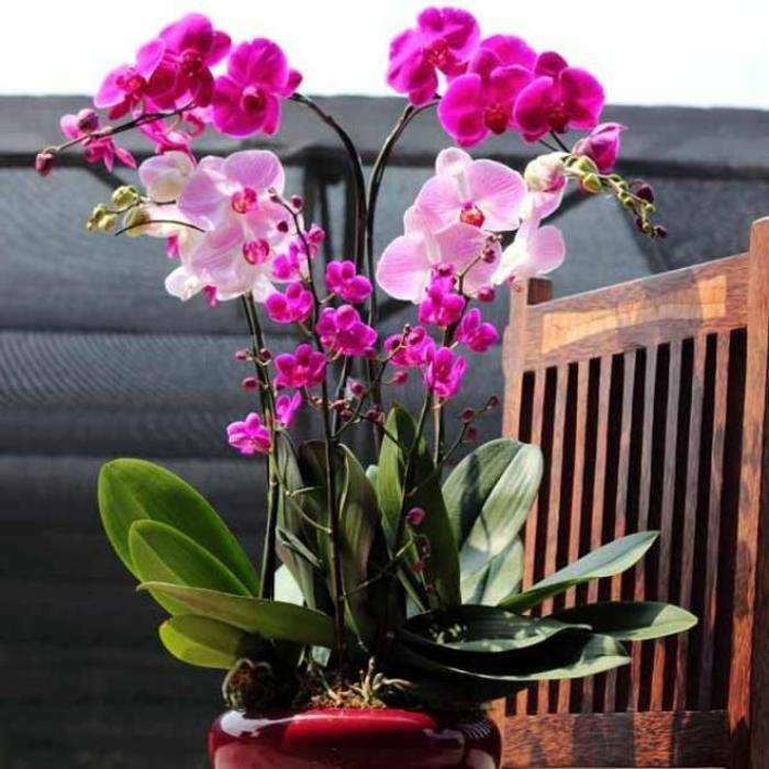 faire-refleurir-une-orchidée-chez-vous-avec-cet-article