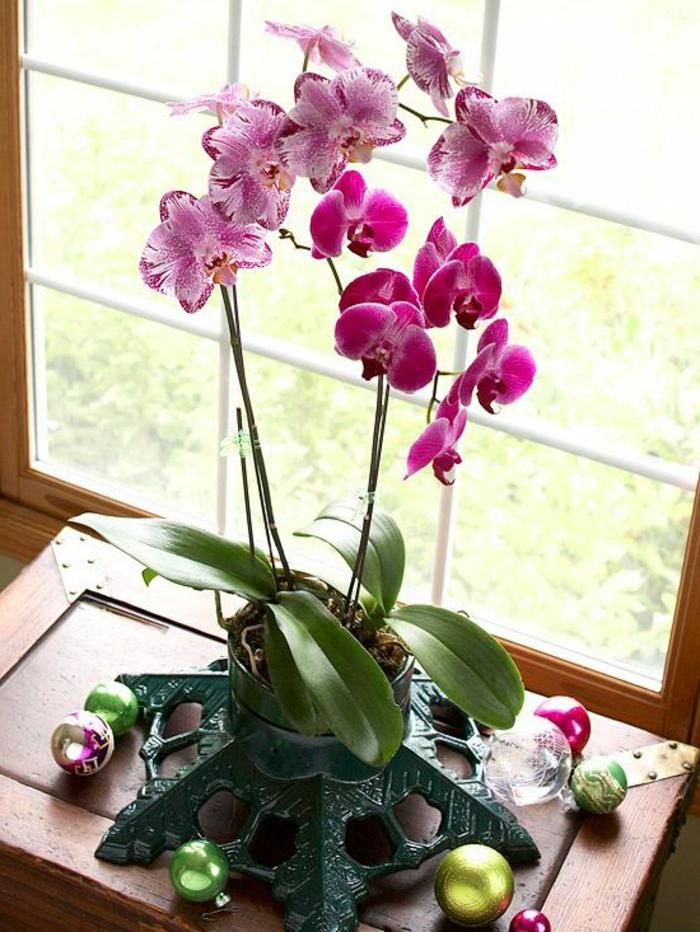 faire-refleurir-une-orchidée-rose-une-jolie-decoration-avec-fleurs-pour-la-maison