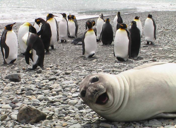 humour-images-drôles-intéressantes-drôle-d-image-moment-parfait-photo-animale-resized