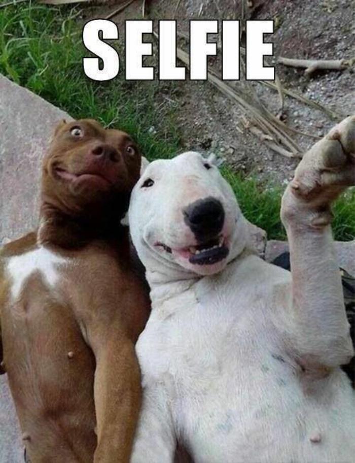 image-drôle-animal-image-drôle-à-télécharger-chiens-selfie-resized