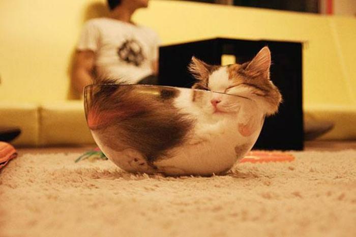 image-drôle-animaux-image-drôle-à-télécharger-belle-chat-chatton-dans-bol-en-verre-resized