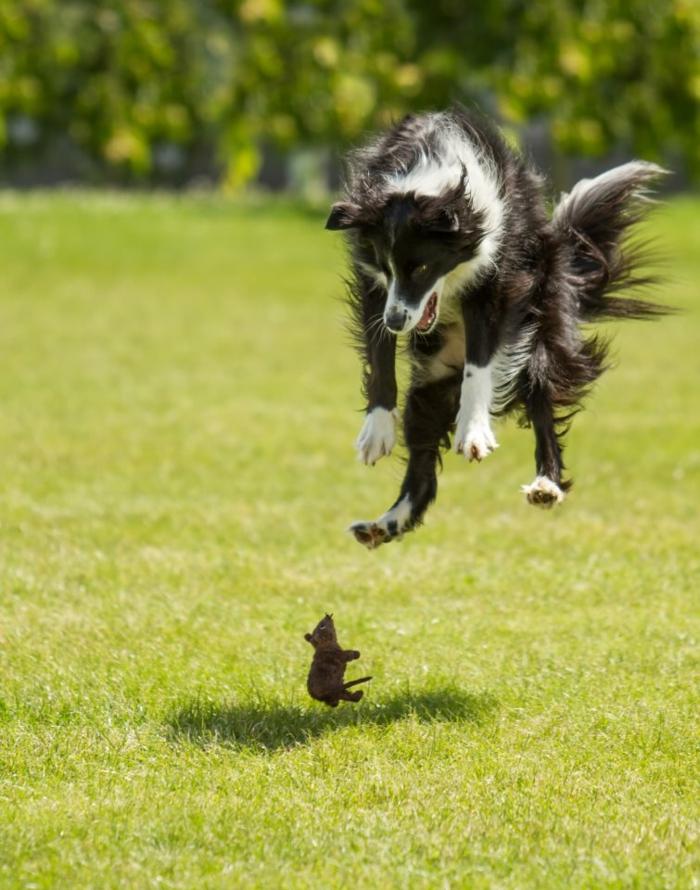 image-drôle-animaux-image-drôle-à-télécharger-chien-peur-resized
