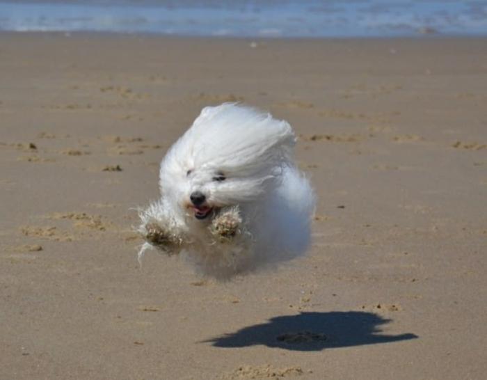image-drôle-animaux-image-drôle-à-télécharger-chien-sympa-sourire-resized