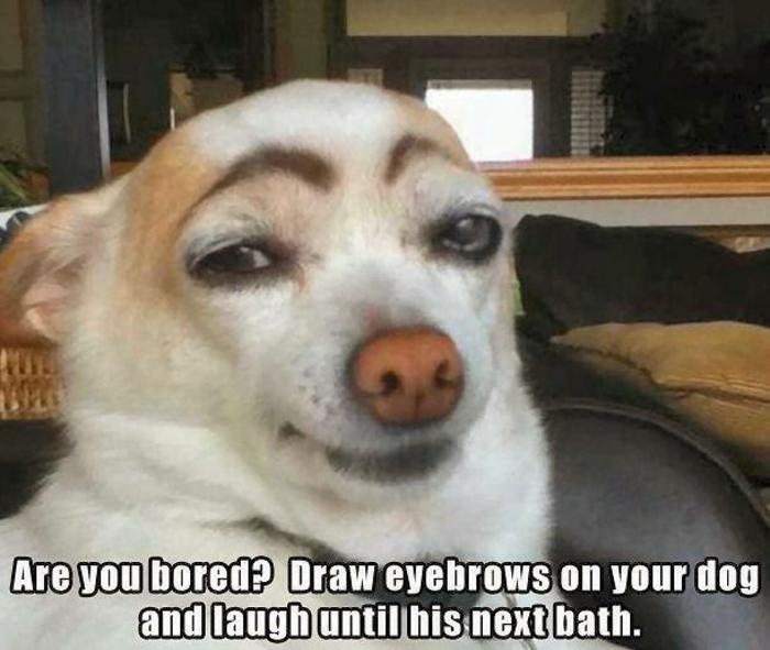 image-drôle-animaux-image-drôle-à-télécharger-une-idée-chien-curieux-resized