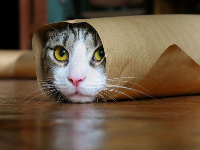 image-drôle-des-animaux-image-drôle-à-télécharger-chat-burito-resized