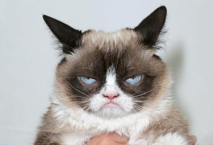 image-drôle-des-animaux-image-drôle-à-télécharger-chat-qui-ne-nous-aime-pas-trop-resized