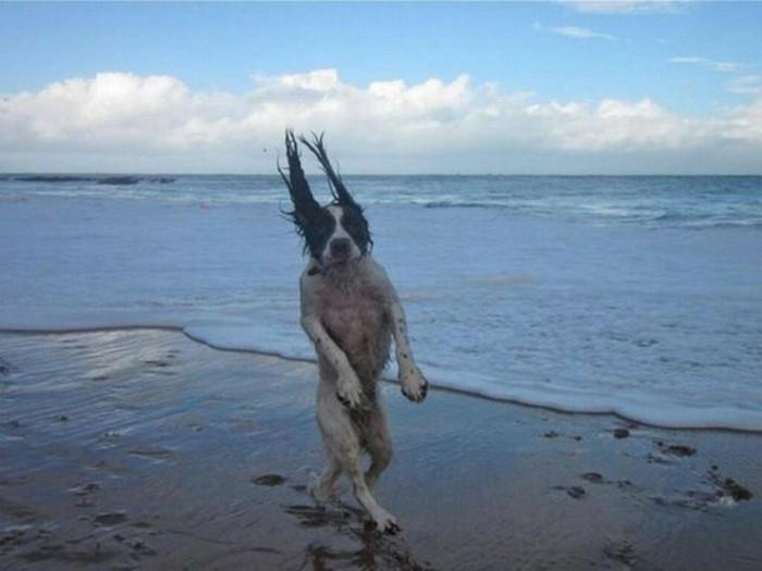 images-drôles-animaux-image-drôle-à-télécharger-chien-au-bord-de-la-mer-resized