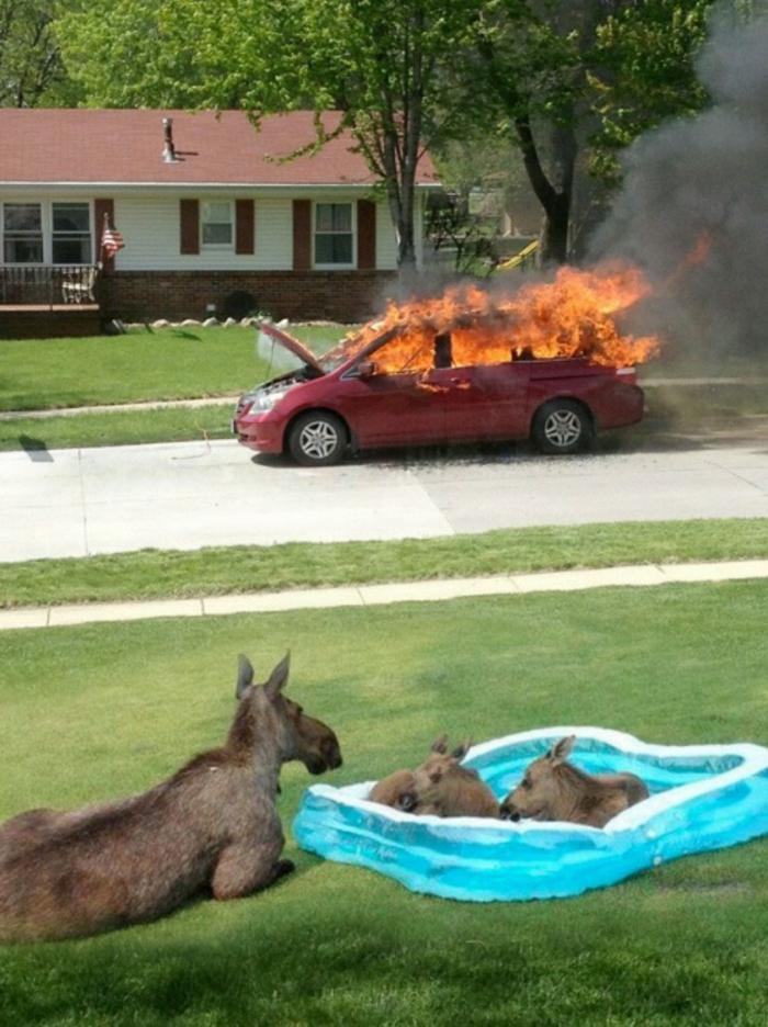 images-drôles-gratuites-image-drôle-anniversaire-voiture-feu-lammas-calmes-resized