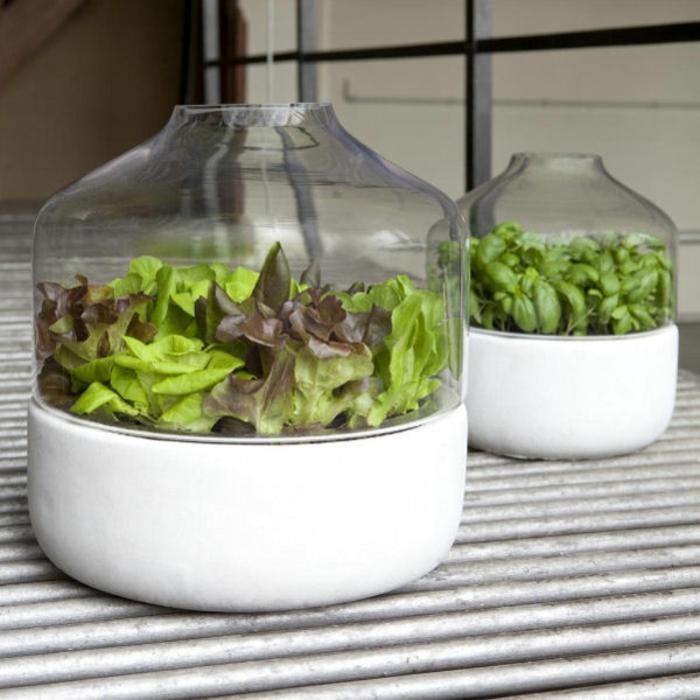 jardin-d-intérieur-potager-d-intérieur-salle-de-séjour-belle-verre-vase-plante-verte