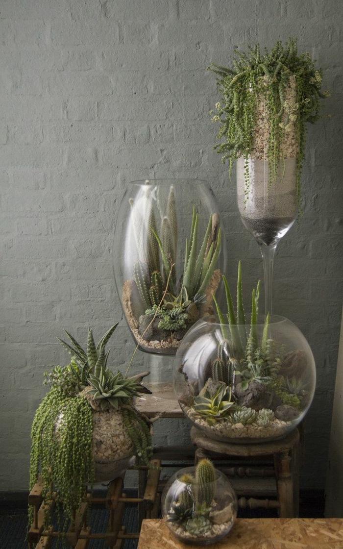 jardin-d-intérieur-potager-d-intérieur-salle-de-séjour-cactusse-vase-en-verre
