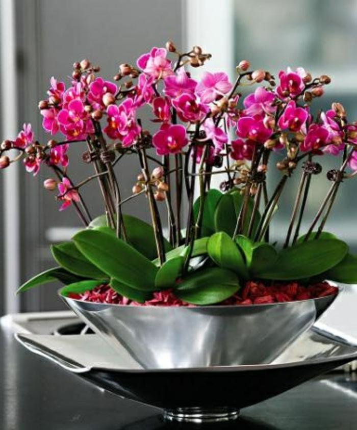 joli-orchidée-violet-d-intérieur-pour-bien-decorer-chez-vous-d-un-moyen-original