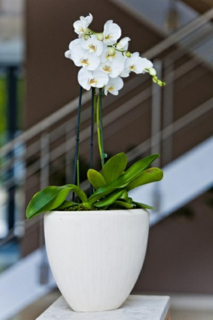 jolie-orchidée-blanche-d-intérieur-pour-bien-decorer-la-maison-de-vos-reves