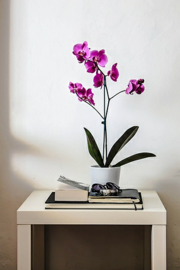 jolie-orchidée-violet-d-intérieur-pour-bien-decorer-le-couloir-avec-murs-blancs