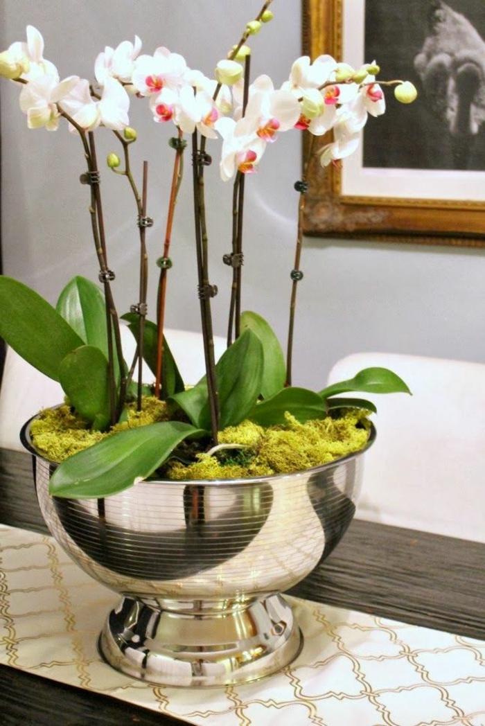 jolie-orchidee-blanche-faire-refleurir-une-orchidée-d-interieur-pour-la-maison-moderne