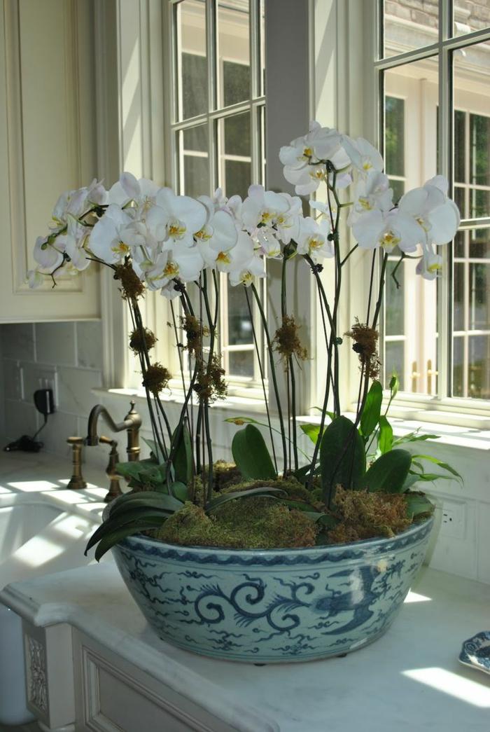 les-orchidées-blanches-un-moyen-original-pour-decorer-chez-vous