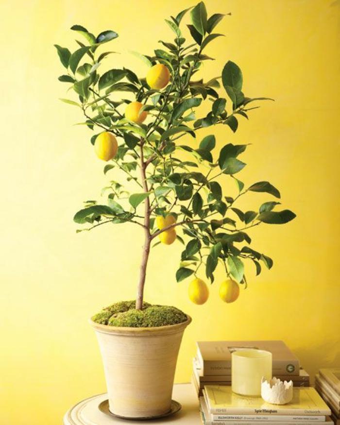 plante-d-intérieur-jardin-interieur-plante-aromatique-plantes-vertes (6)