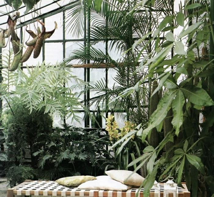 planter-du-basilic-jardin-intérieur-organization-salon-décoration-beau-verte