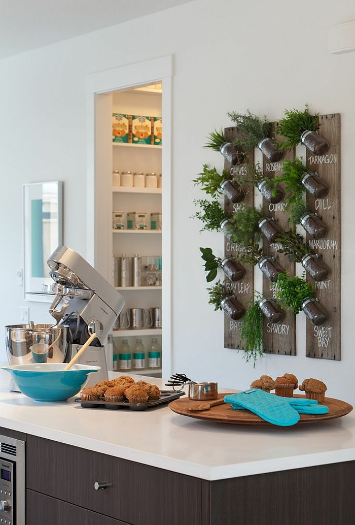 planter-du-basilic-jardin-intérieur-organization-salon-décoration-cuisine