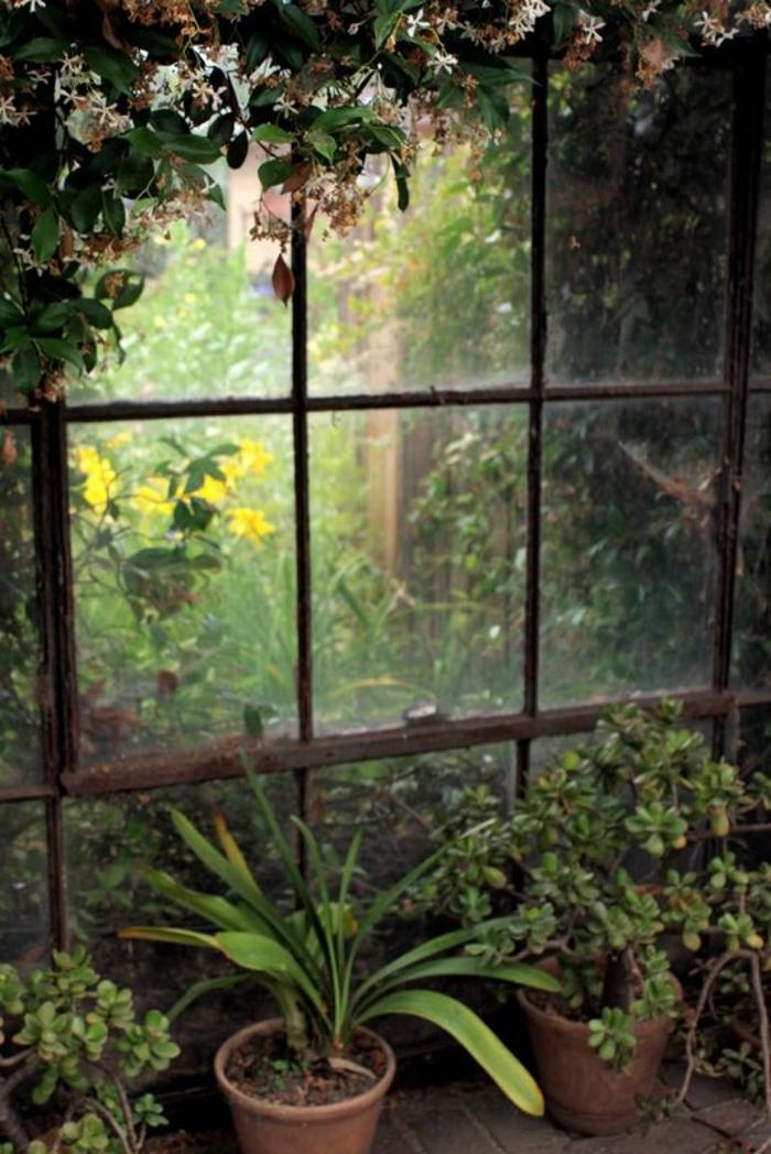planter-du-basilic-jardin-intérieur-organization-salon-décoration-fenetre