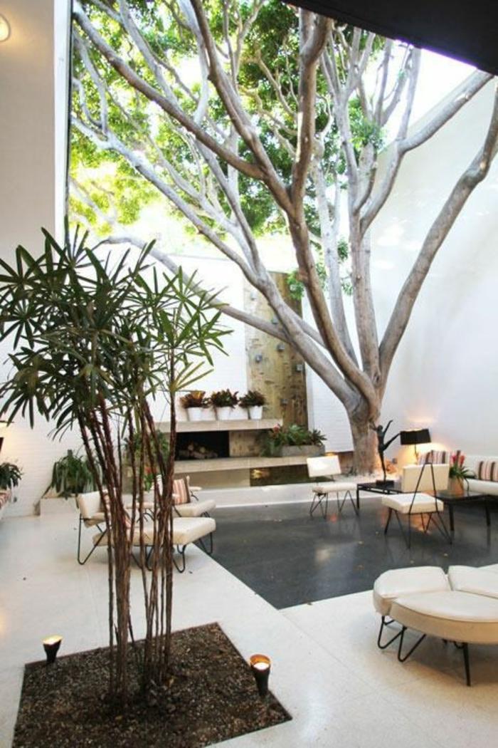 ... -plante-verte-d-intérieur-salle-de-séjour-arbre-dans-la-maison