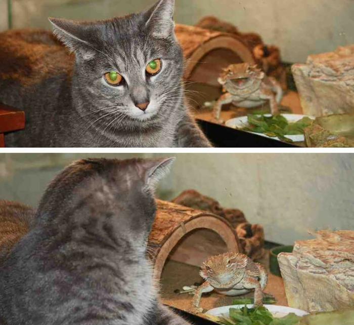 une-image-drôle-et-insolite-idée-image-drôle-du-jour-chat-et-grenouille-resized