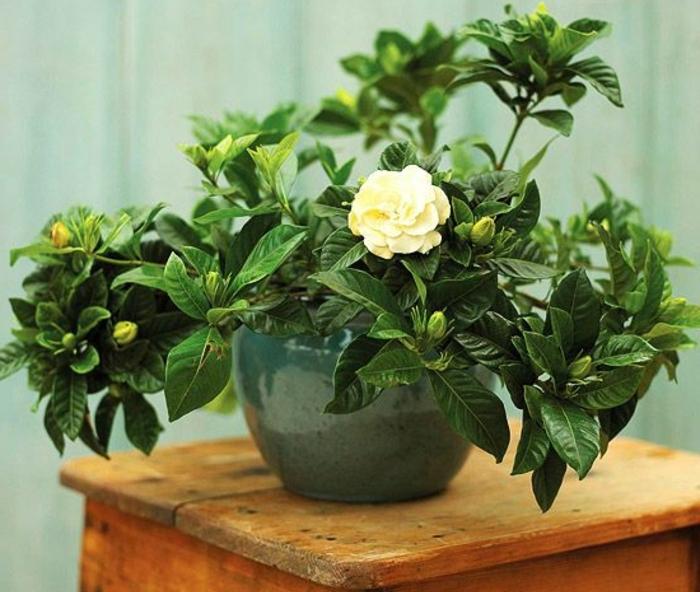 0-plante-exotique-intérieur-roses-blanches-d-intérieur-et-fleur-blanc-pour-l-intérieur