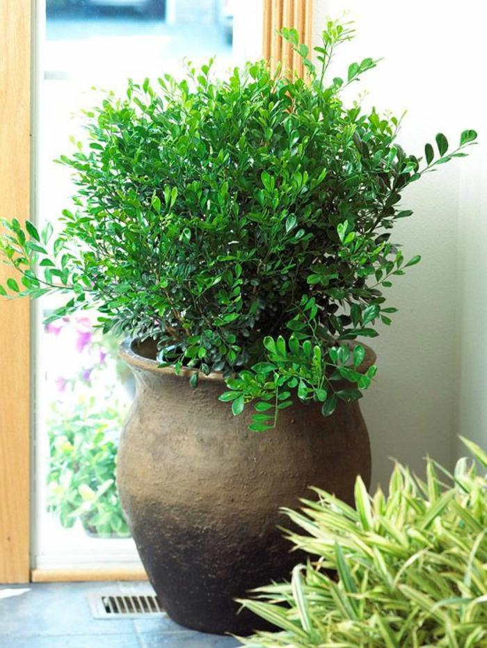 1-decouvrir-la-beauté-des-plantes-vertes-d-interieur-comment-bien-amenager-chez-vous