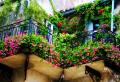 Les fleurs de balcon, comment choisir les meilleures?