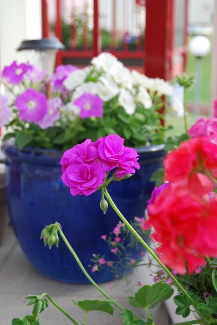 Fleurs jardinieres choisir accueil design et mobilier - Fleur de jardiniere ...