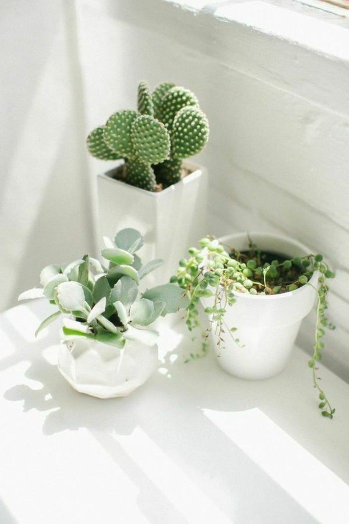 1-jolie-decoration-avec-plante-exotique-intérieur-comment-bien-decorer-chez-vous